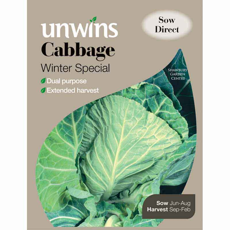 Picture of Unwins Cabbage Seeds: Winter Green (Spring Greens)