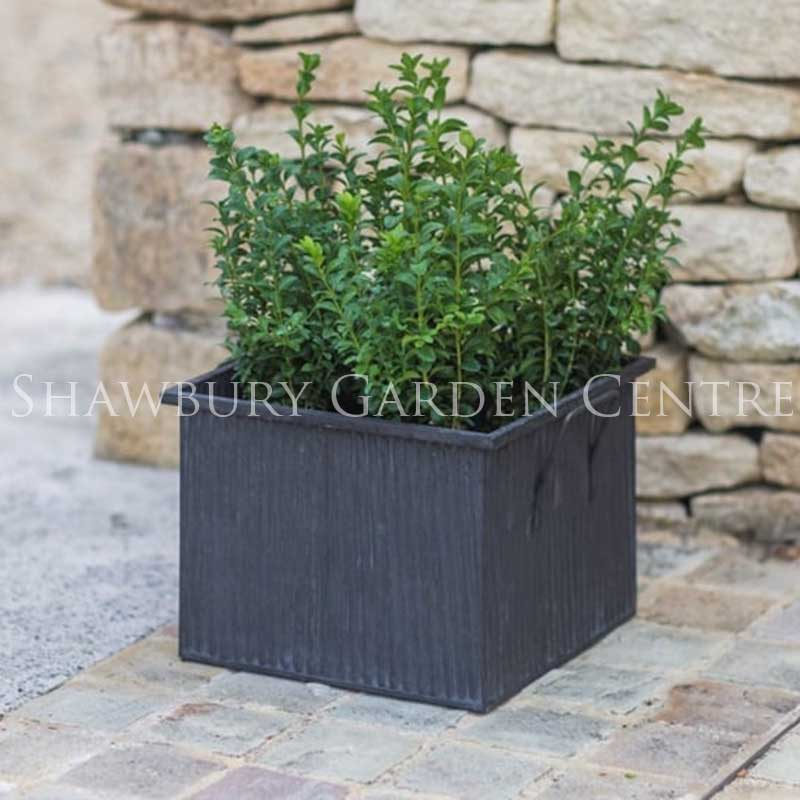 Picture of Garden Trading Square Vence Planter