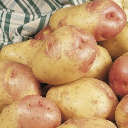 Picture of Unwins King Edward Seed Potatoes
