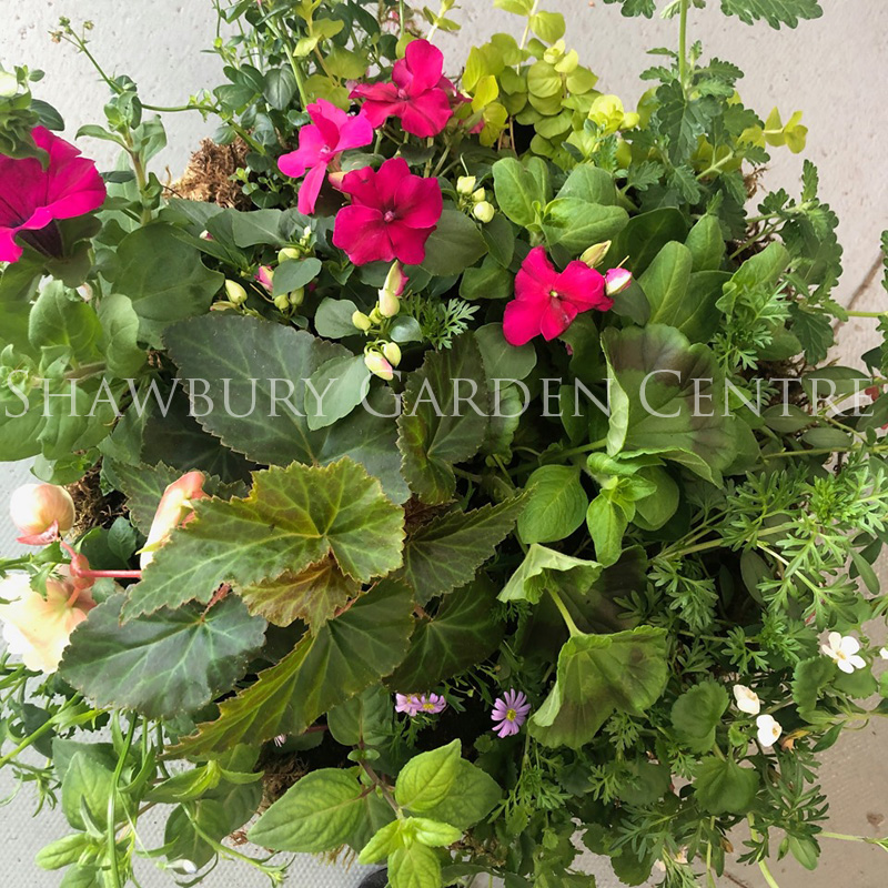 Picture of Summer Hanging Basket