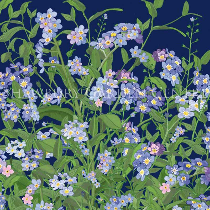 Picture of Green Pebble 'Forget-Me-Nots' Card by Mig Wyeth