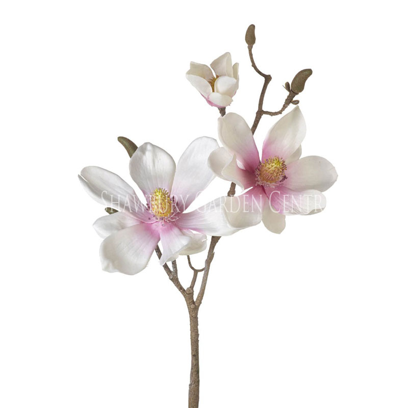Picture of Parlane Magnolia Stem with 3 Flowers