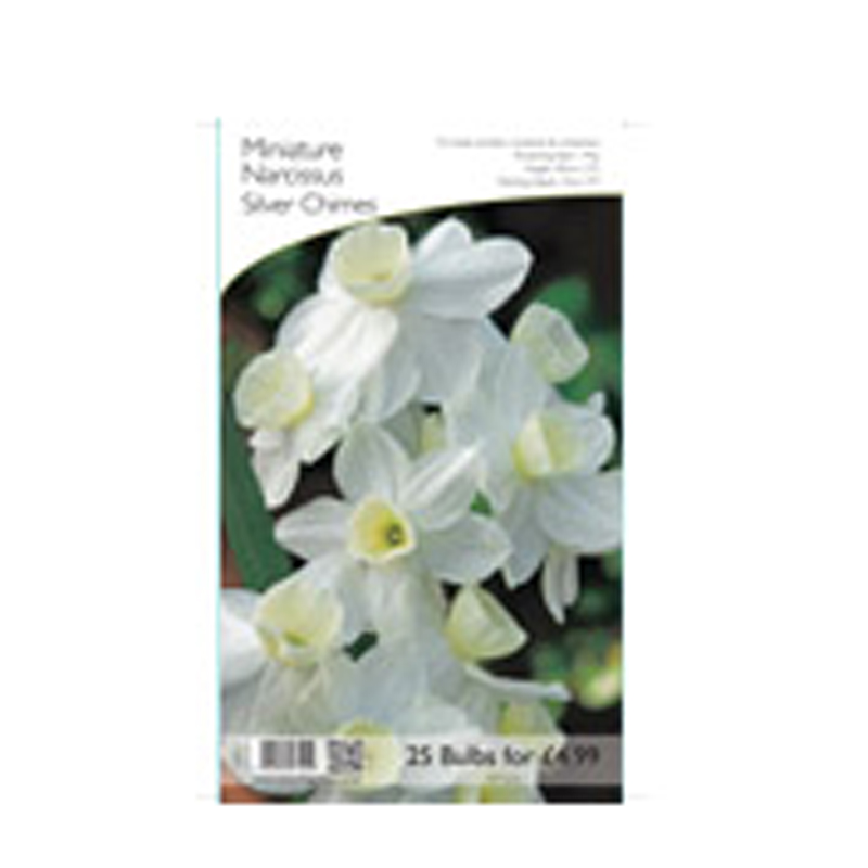 Picture of Silver Chimes Miniature Narcissus Bulbs