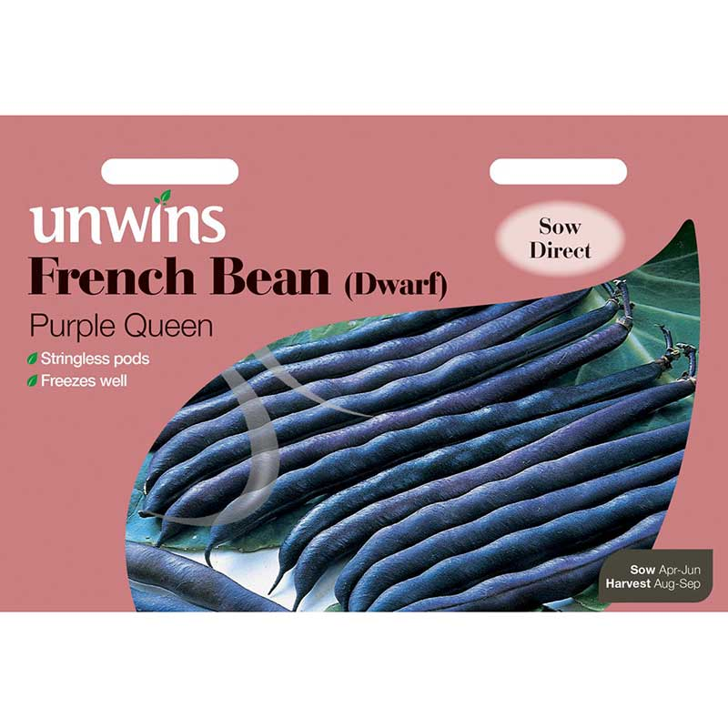 Picture of Unwins 'Purple Queen' Dwarf French Bean Seeds