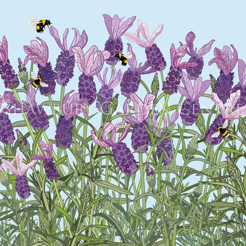Picture of 'French Lavender' blank inside card by Mig Wyeth