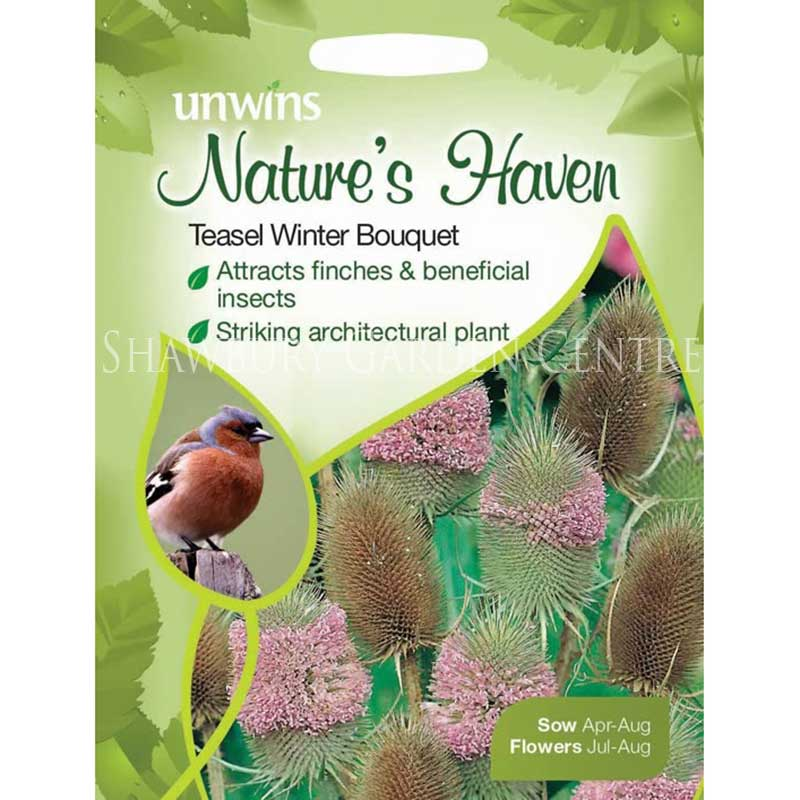 Picture of Unwins Nature's Haven Teasel Winter Bouquet Seeds