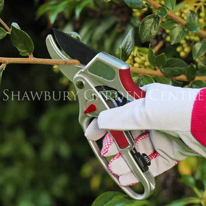 Picture of Kent & Stowe Ratchet Secateurs