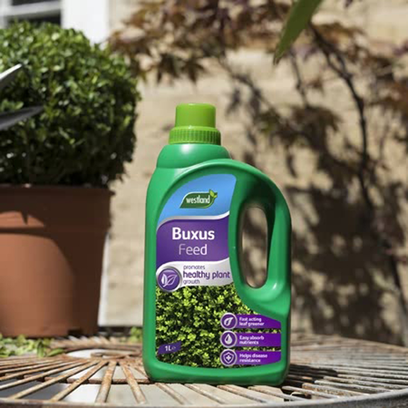 Picture of Westland Buxus Feed