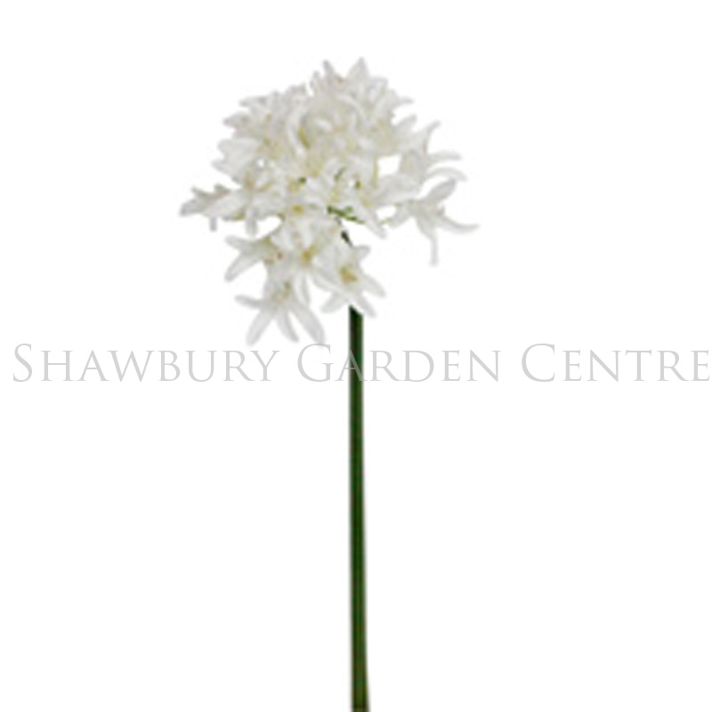 Picture of Gisela Graham White Agapanthus Stem