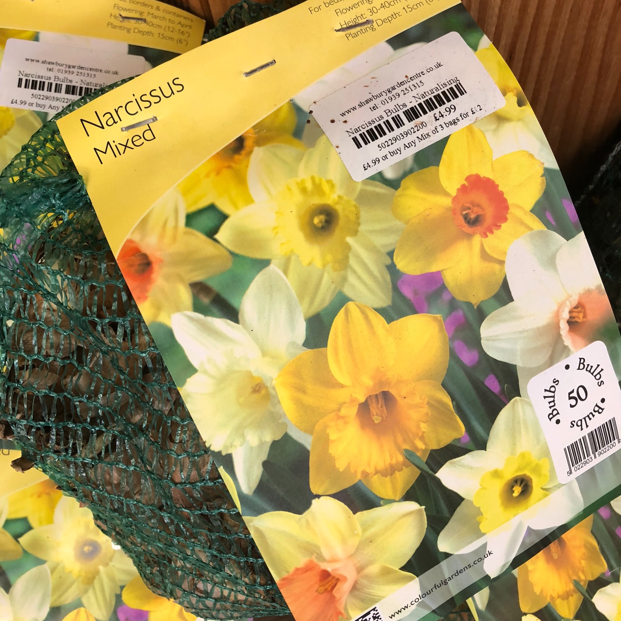 Picture of Narcissus Bulbs - Naturalising Mix