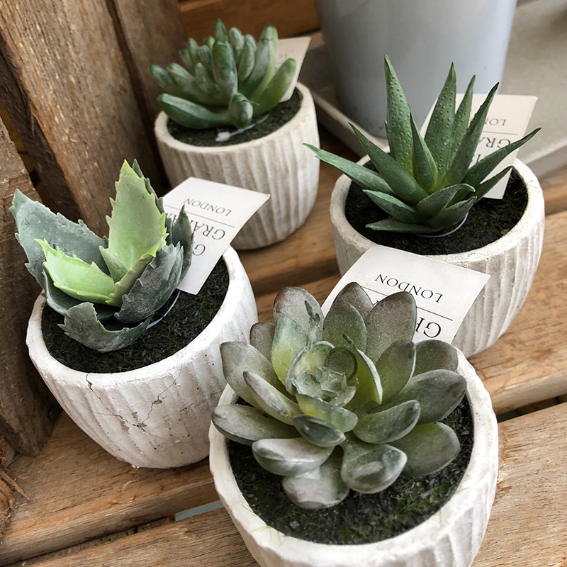 Picture of Gisela Graham Potted Mini Succulent Ornament