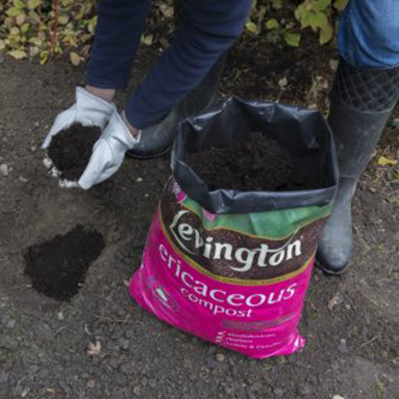 Picture of Levington® Ericaceous Compost