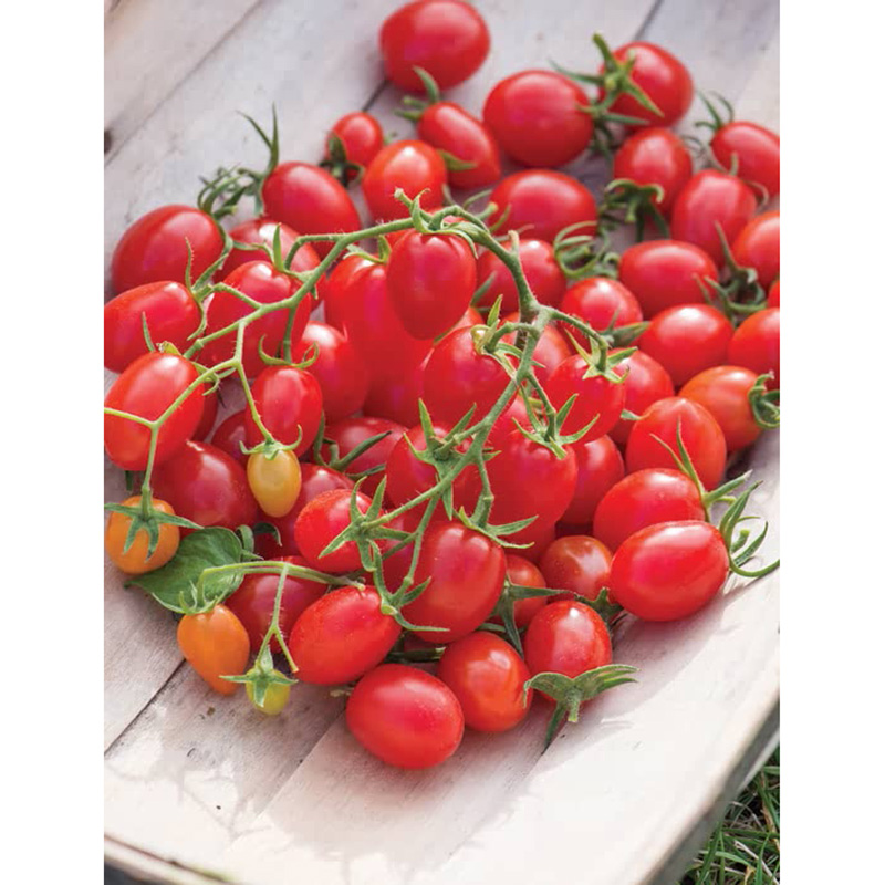 Picture of Unwins 'Romello' Cherry Plum Tomato Seeds