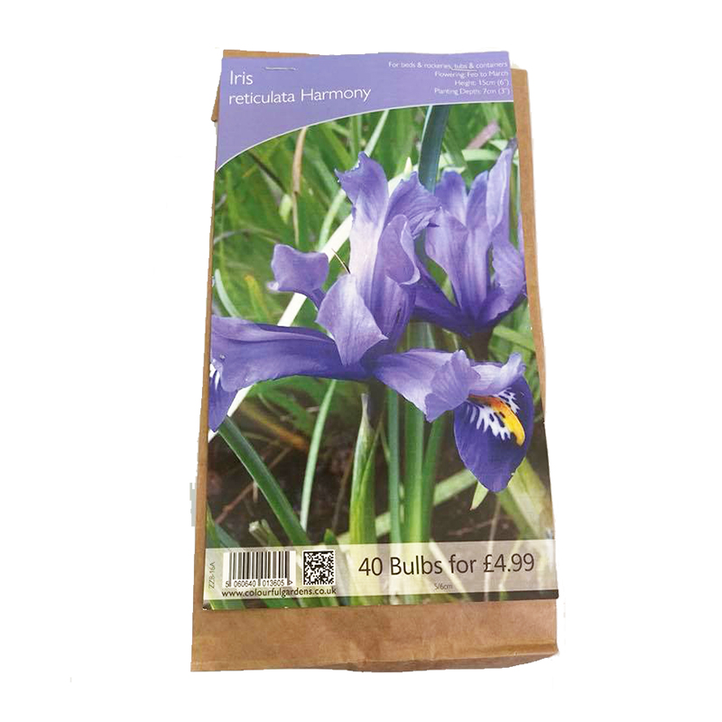 Picture of Pack of 40 Iris reticulata blue Bulbs