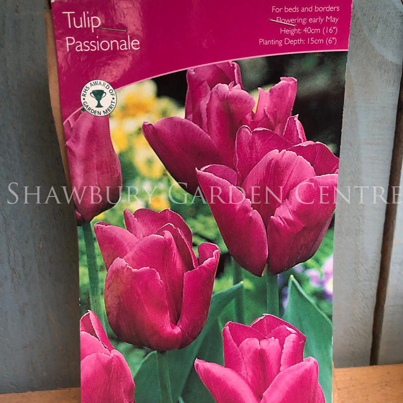 Picture of Tulip 'Passionale' Bulbs