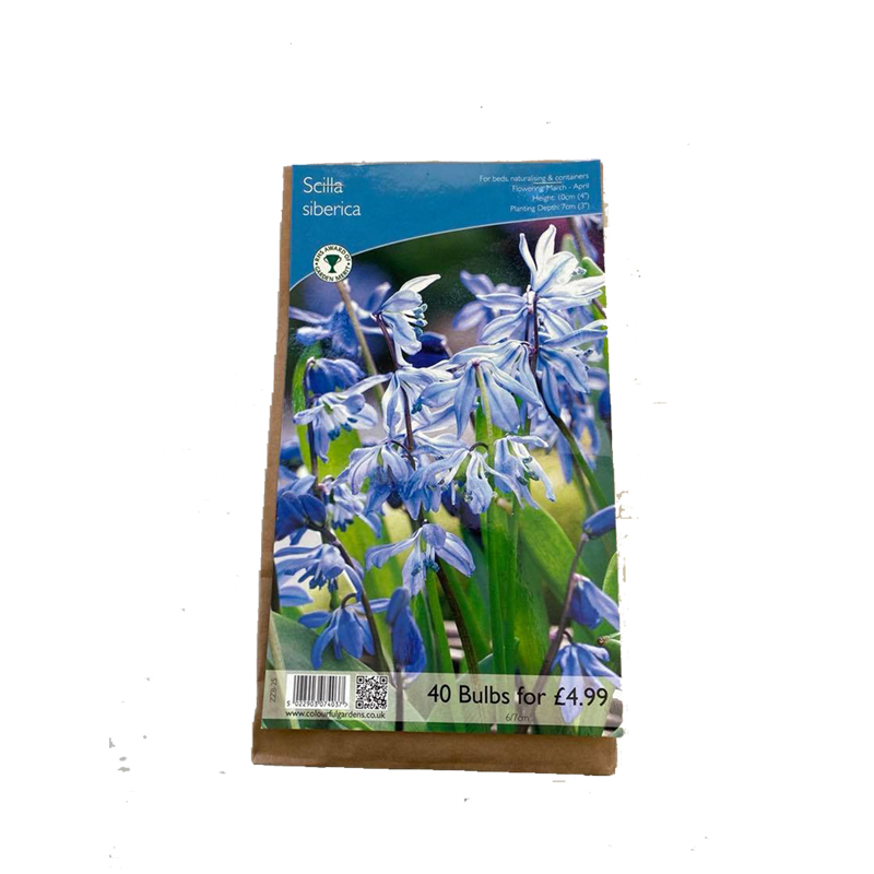 Picture of Scilla siberica Bulbs