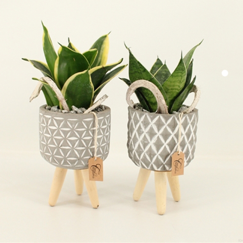 Picture of Green Creation - 3 Legged Pot with Plant