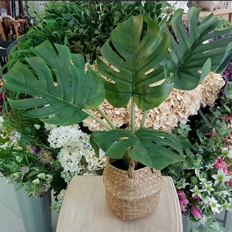 Picture of Faux Cheese Plant in Rattan Basket