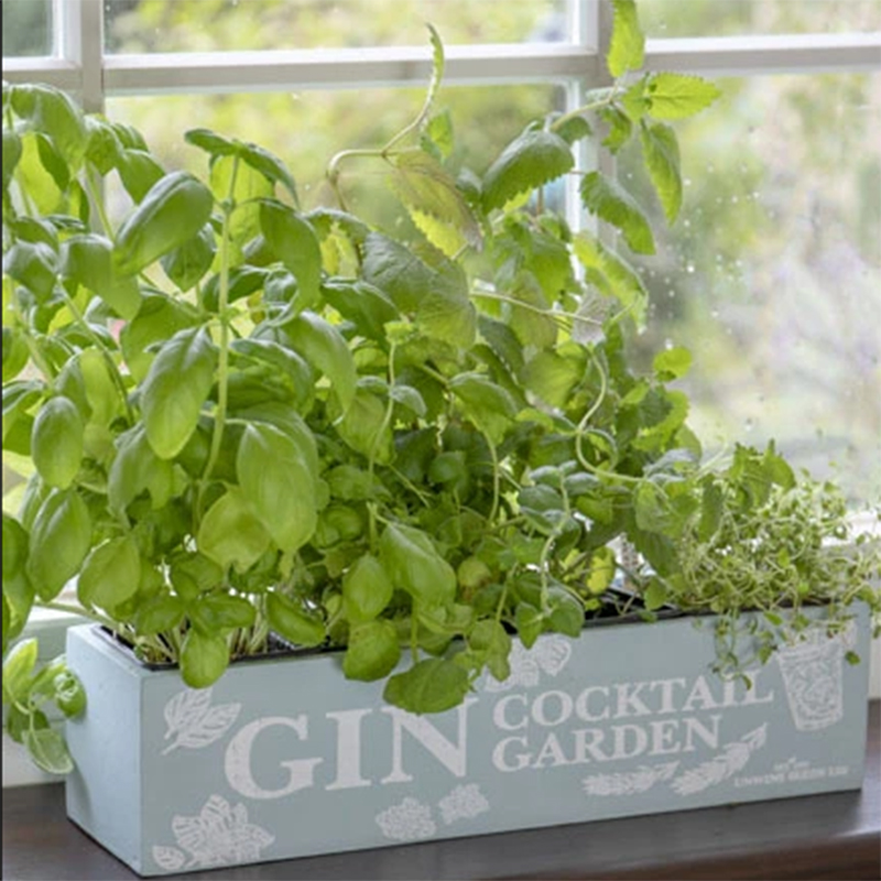 Picture of Unwins Gin Cocktail Garden Kit