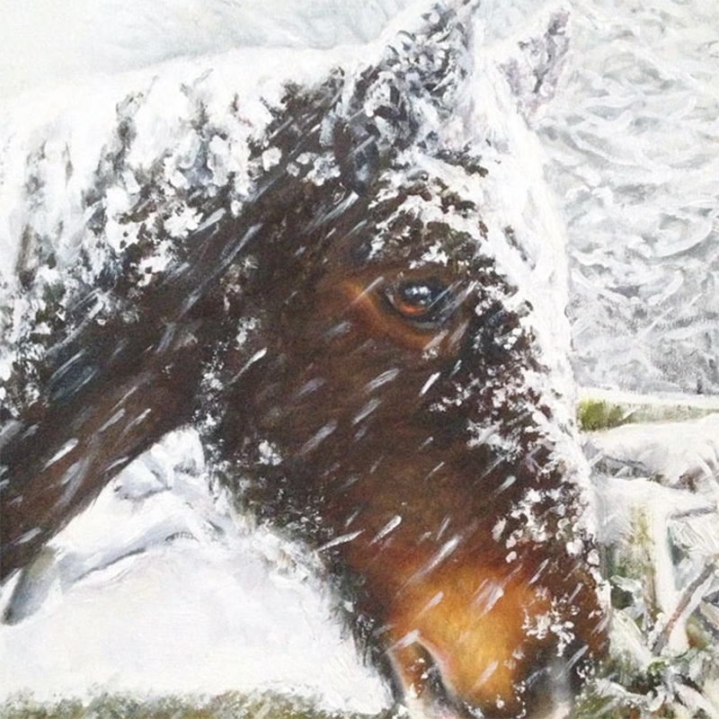 Picture of 'Woodrow In The Snow' by Helen Eaton - blank inside card