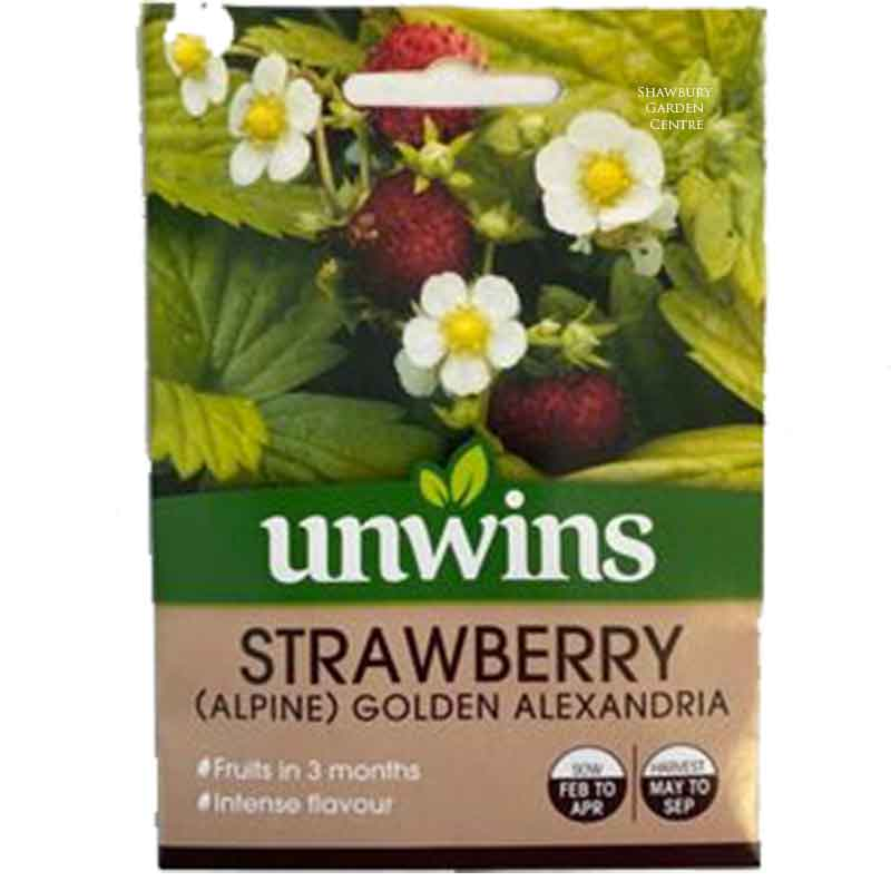 Picture of Unwins STRAWBERRY (Alpine) Golden Alexandria Seeds