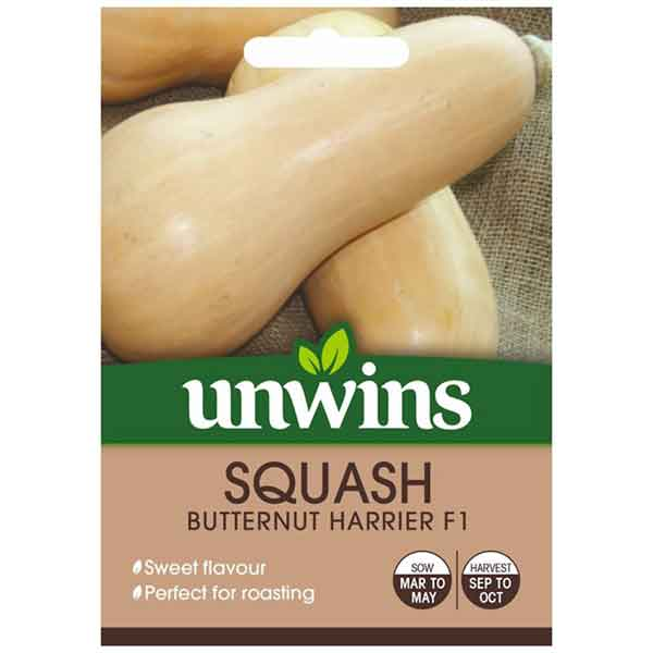 Picture of Unwins SQUASH Butternut Harrier F1 Seeds