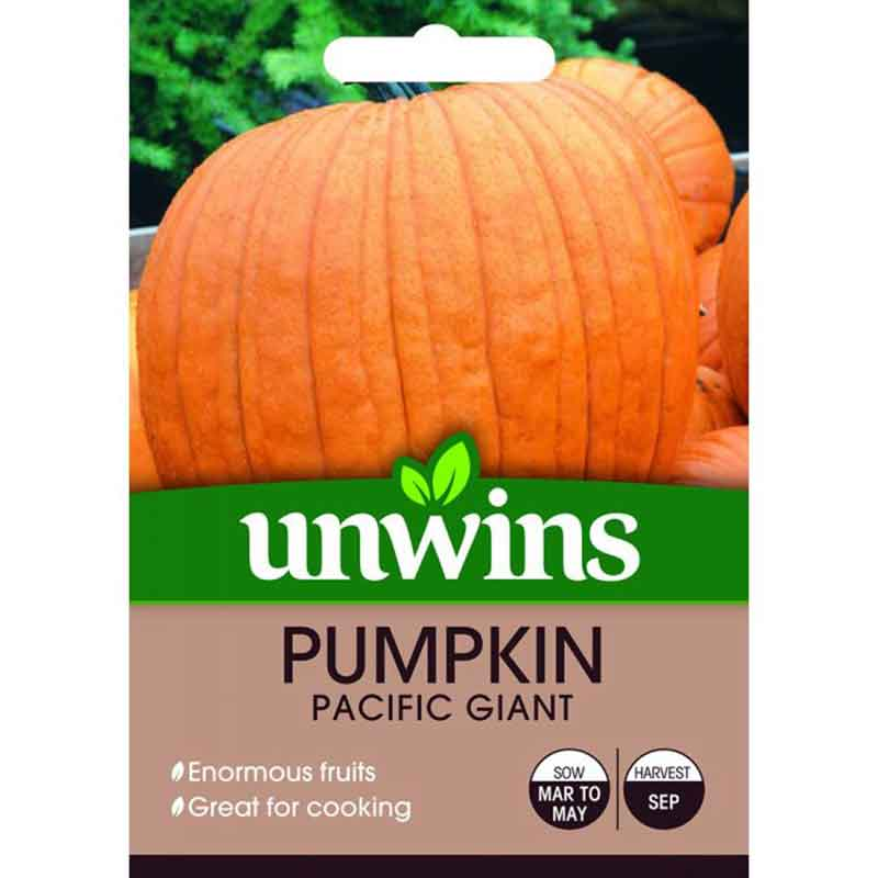 Picture of Unwins PUMPKIN Pacific Giant Seeds