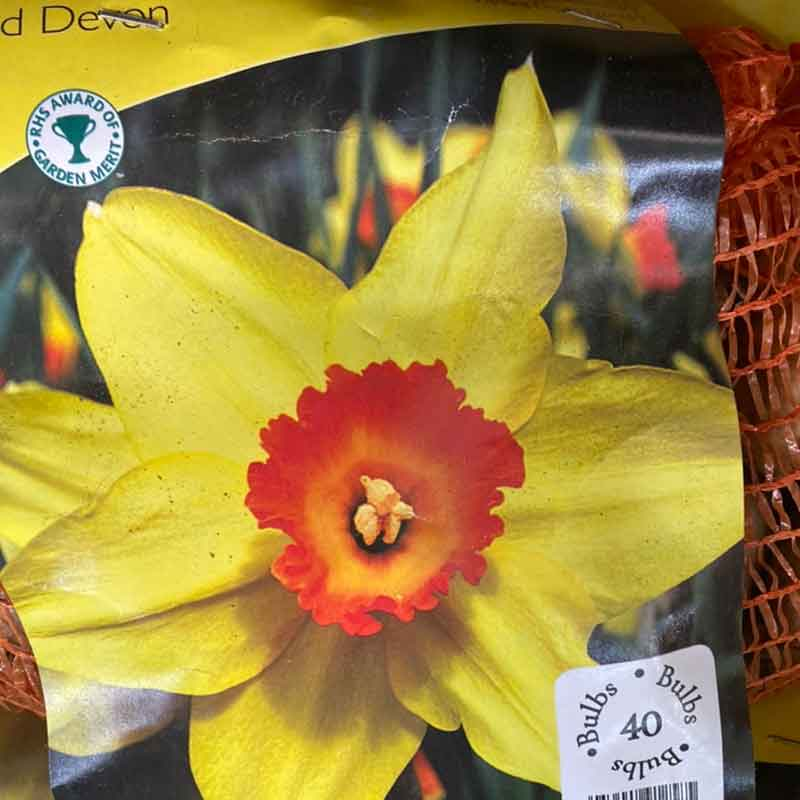 Picture of Narcissus Daffodil 'Red Devon' Bulbs
