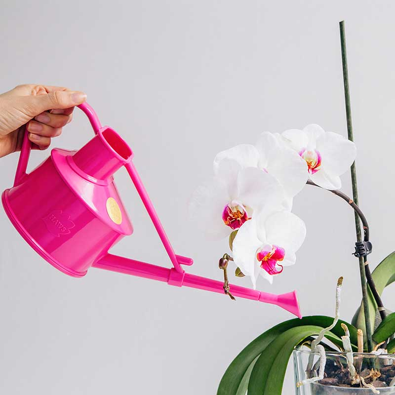 Picture of Haws Handy Indoor Watering Can - Cerise