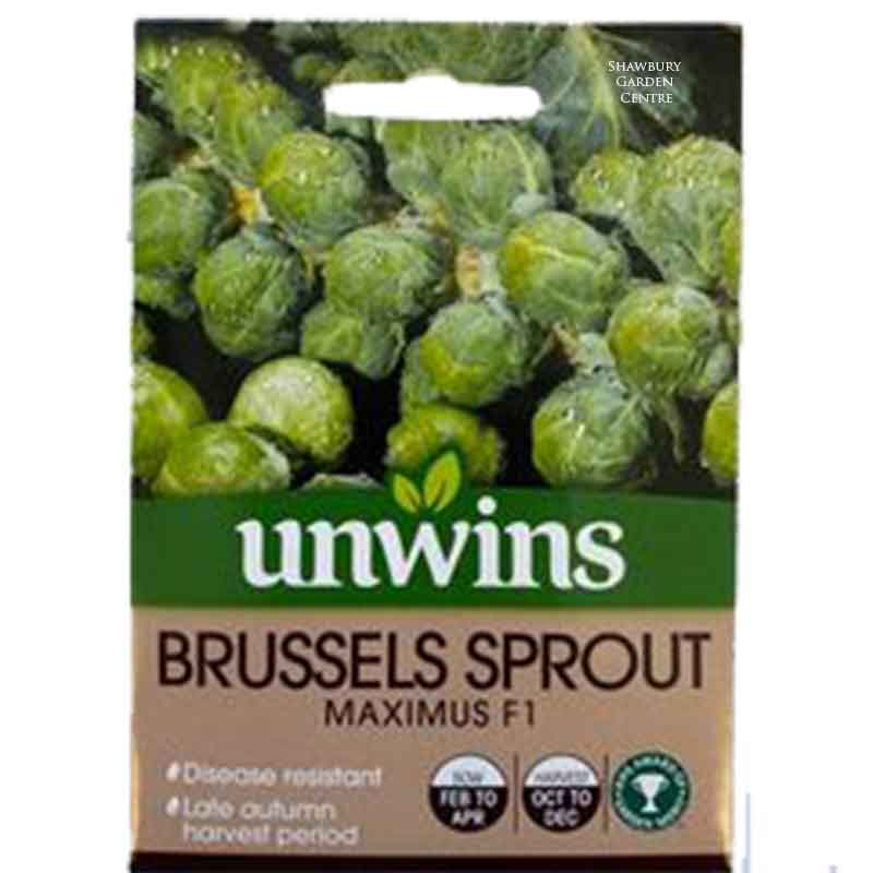 Picture of Unwins Gro-sure® 'Maximus' Brussel Sprout Seeds