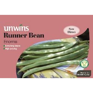 Picture of Unwins 'Enorma' Runner Bean Seeds