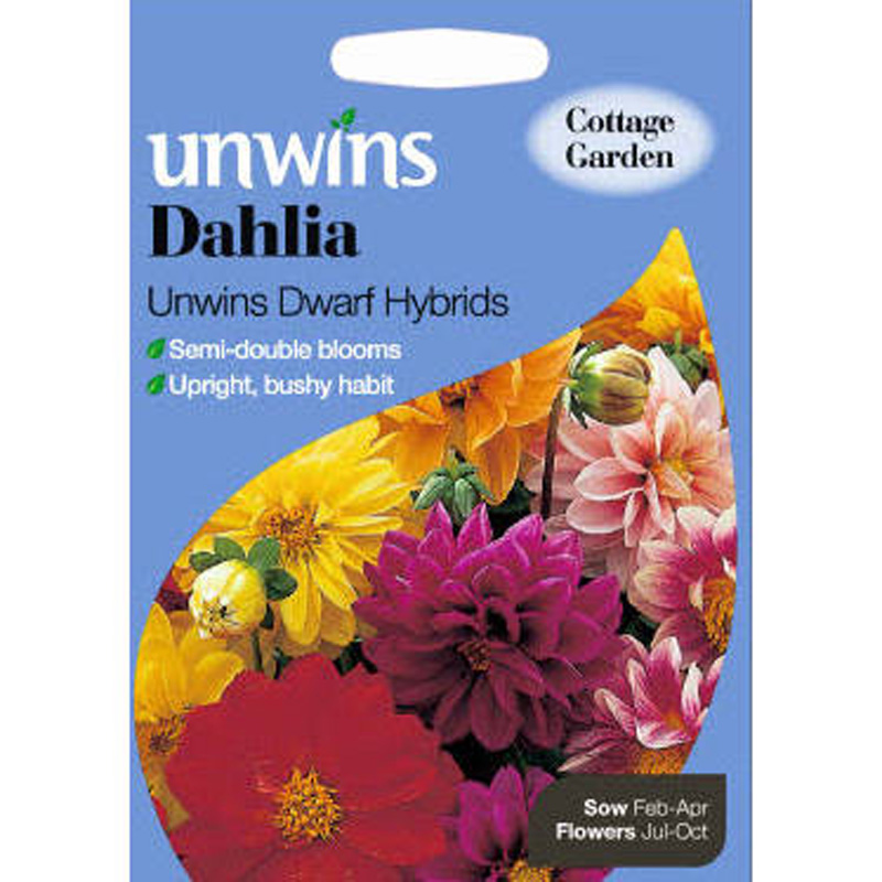 Picture of Unwins 'Dwarf Hybrid' Dahlia Seeds