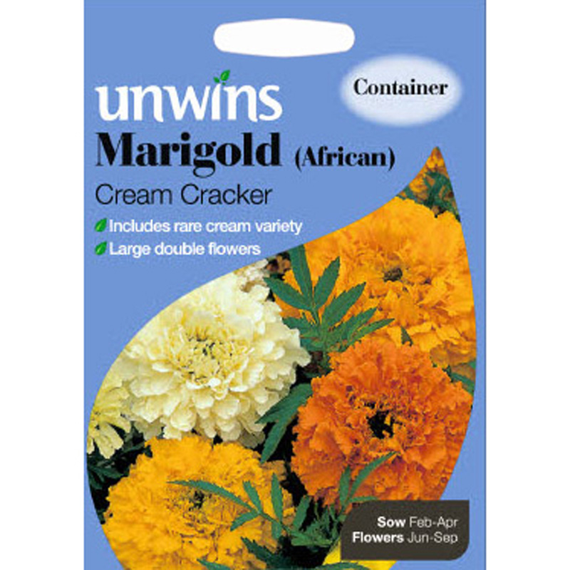 Picture of Unwins 'Cream Cracker' African Marigold Seeds