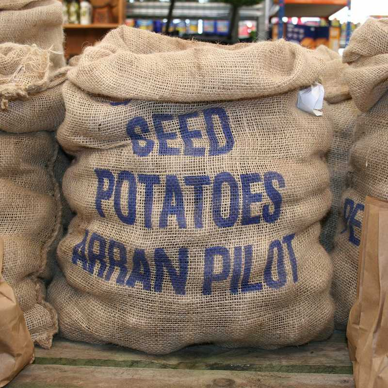 Picture of Unwins Arran Pilot Seed Potatoes