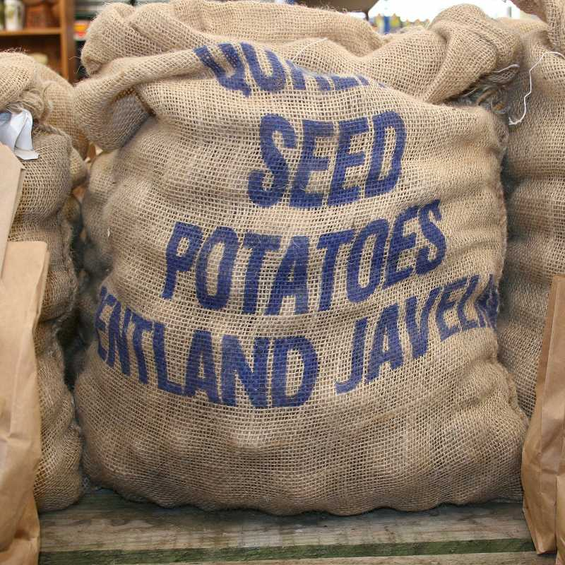 Picture of Unwins Pentland Javelin Seed Potatoes