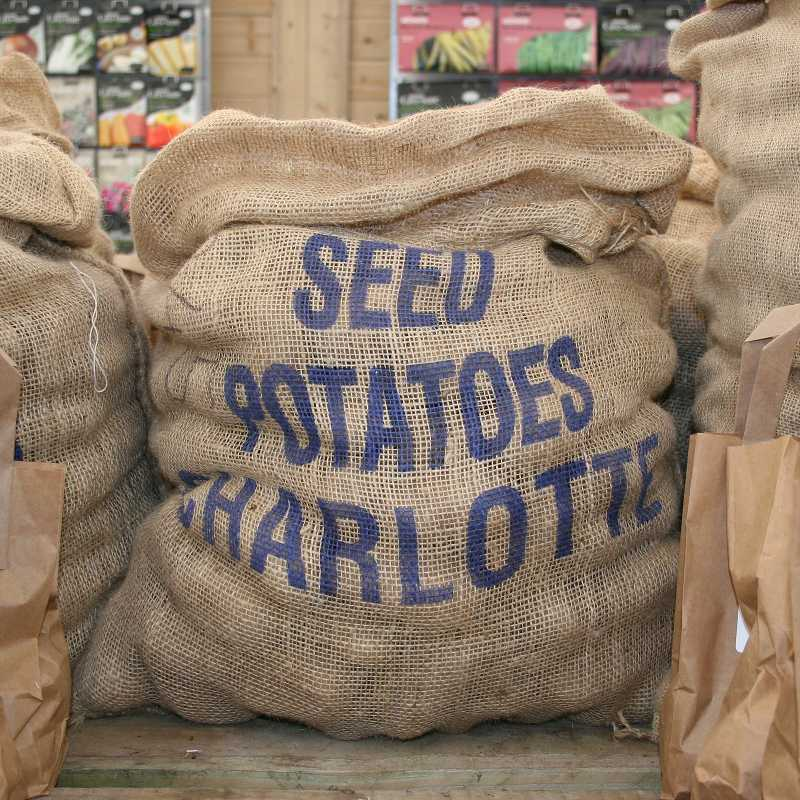 Picture of Unwins Charlotte Seed Potatoes