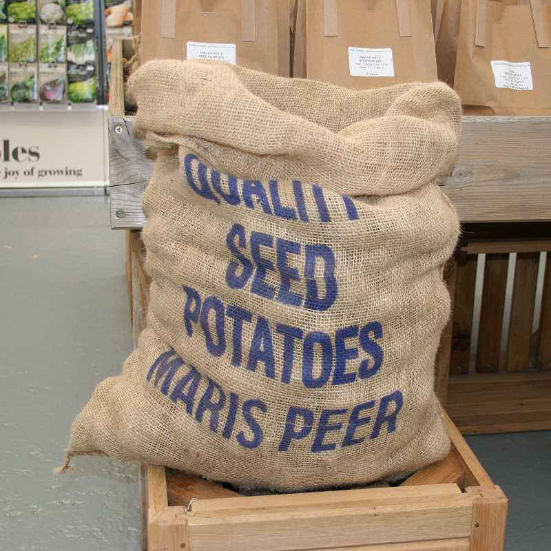 Picture of Unwins Maris Peer Seed Potatoes
