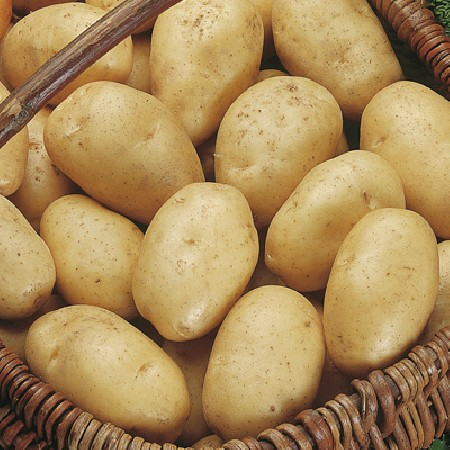 Picture of Unwins Wilja Seed Potatoes