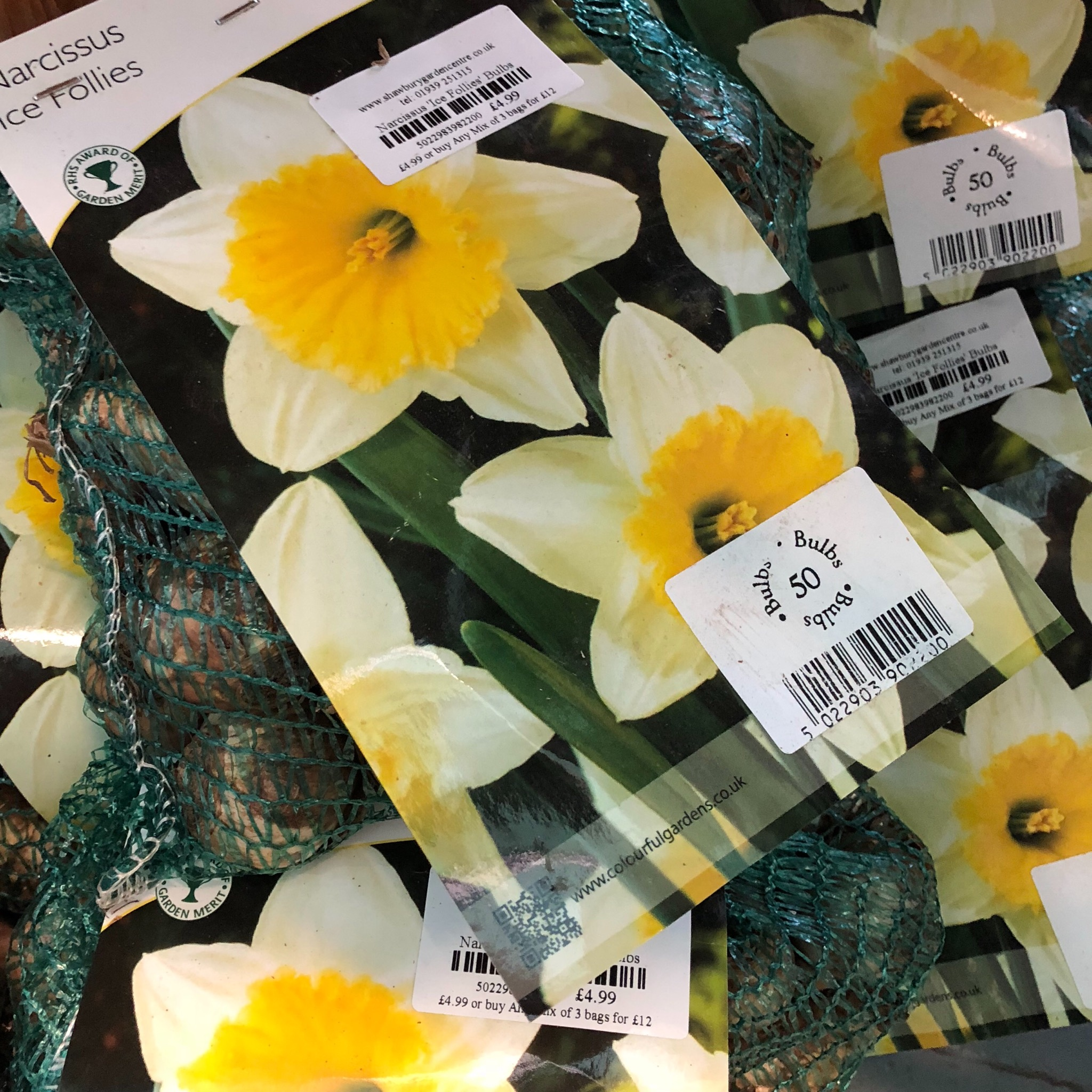 Picture of Narcissus 'Ice Follies' Bulbs