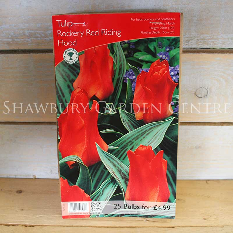 Picture of Rockery Tulip Bulbs 'Red Riding Hood'