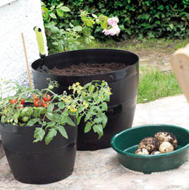 Picture of Plastic Plant Pots