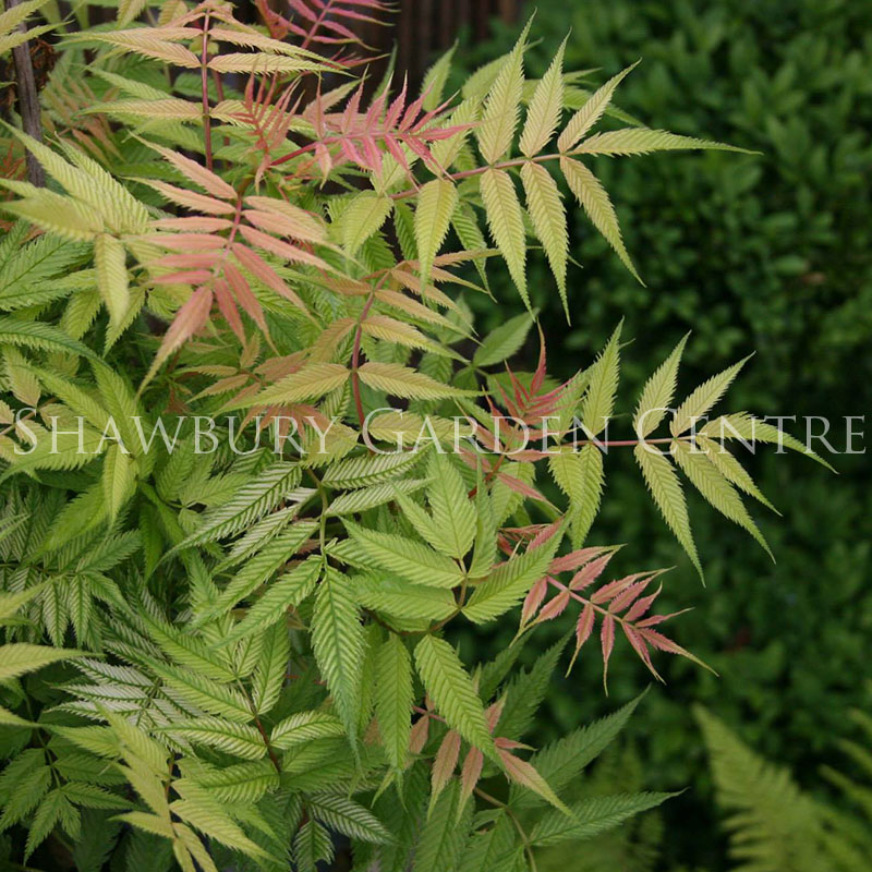 Picture of Garden Shrubs